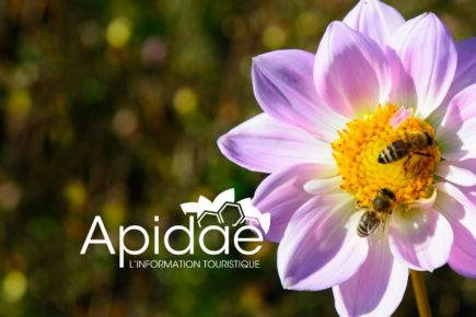 Logo de apidae